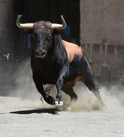 Big bull running in bullring 版權商用圖片