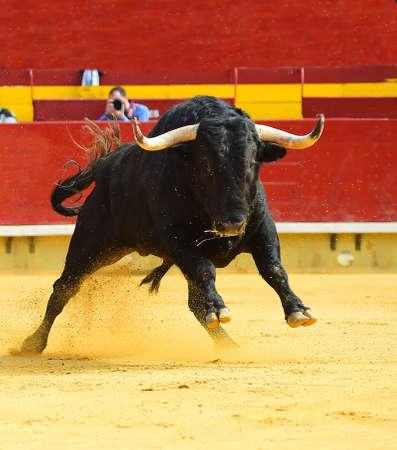 black bull in spain Reklamní fotografie
