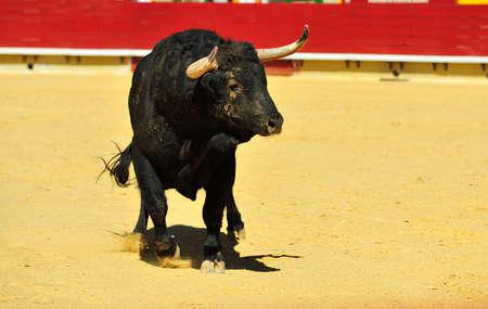 big bull Reklamní fotografie