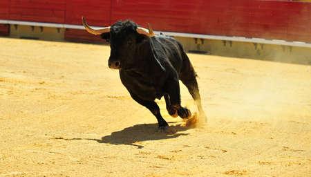 bull in spain Reklamní fotografie