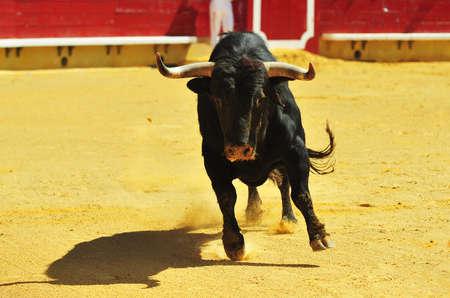 Bullring Standard-Bild