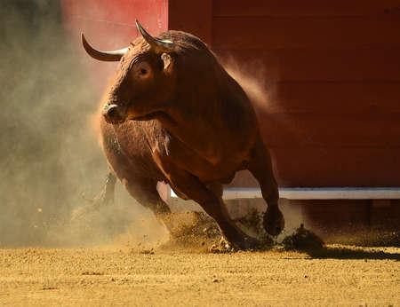 Bull on spain