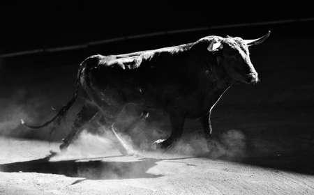 bull in spain Imagens