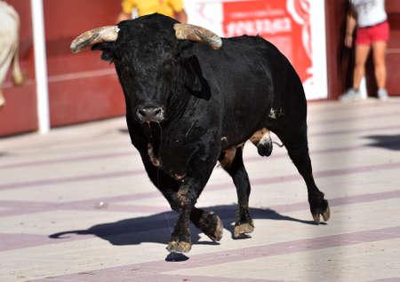 black bull in spain Stockfoto