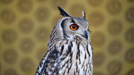 owl 写真素材 - 132044894