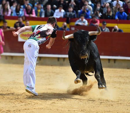 traditional spectacle in spain with bull Stock Photo