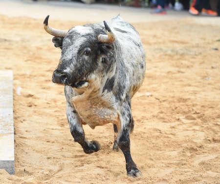 The bull running on spanish bullring Imagens