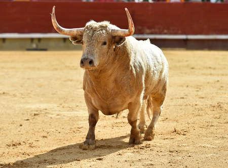 strong bull in spain