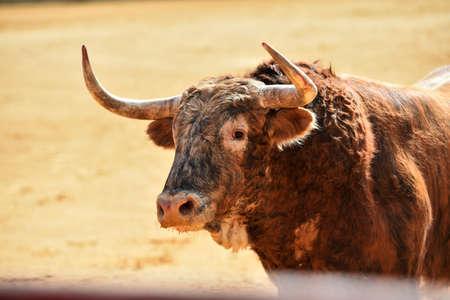horns of spanish big bull