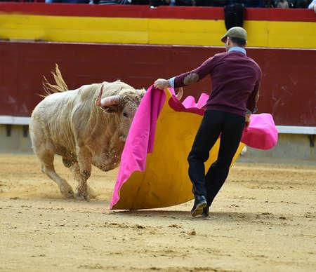 bullfight on spain