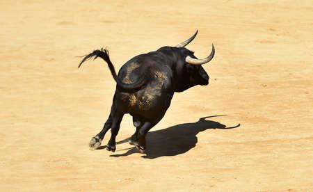 Black bull on spain