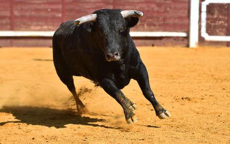 black powerful bull with big horns