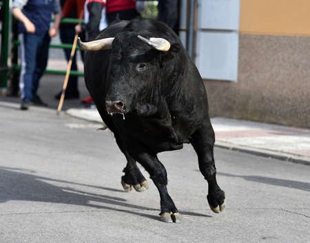 a black bull with big horns running on the spanish bullring