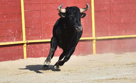 spanish powerful bull with big horns 免版税图像
