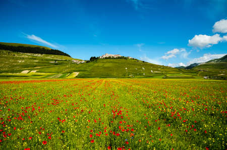 Castelluccio di Norcia, small town among Sibillini mountains, almost completely destroyed after the earthquake, during fields flowering (June 2020).