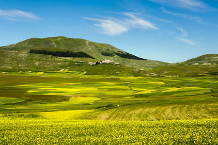 Flowering of cultivated fields (lentils) in the Piano Grande of Castelluccio di Norcia, Sibillini mountains, with the village on the hill. June 2020.