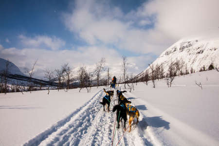 Dog sledding in Lofoten Islands, Northern Norway.