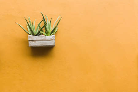 Pot with Aloe plant on a colorful wall. 스톡 콘텐츠