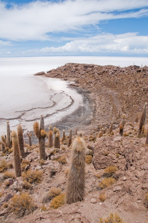 incahuasi: Desert vegetation on Incahuasi island in Salar de Uyuni, Bolivia Stock Photo