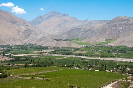 vineyard plain: Elqui valley, Chile