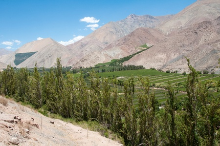 Elqui valley, Chile Stock Photo - 10766403