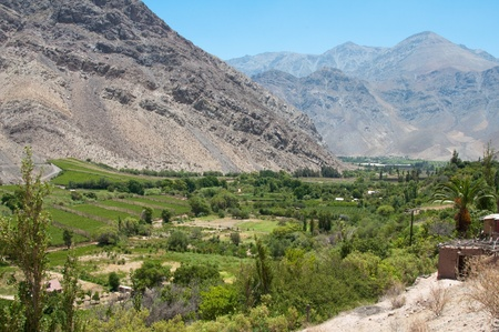 vineyard plain: Vineyard at Elqui valley, Chile