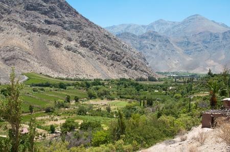 vineyard plain: Vineyard at Elqui valley, Chile