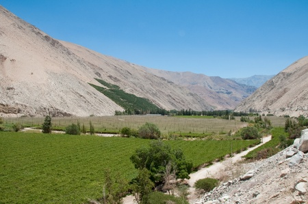 vineyard plain: Vneyard at Elqui valley, Chile