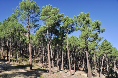 mediterranean forest: Mediterranean forest at Albarracin range