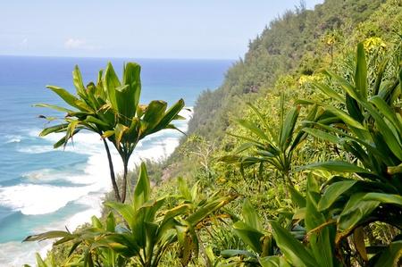 kauai: Na Pali Coast trail, Kauai