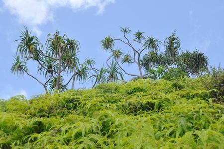 na: Na Pali Coast trail, Kauai