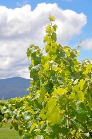 marlborough: Marlborough wine region