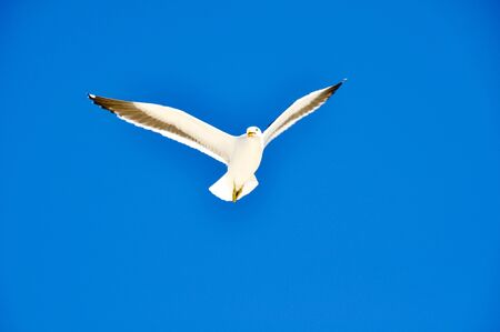 Seagulls flying with blue sky photo