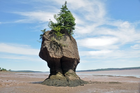 coastal erosion: Hopewell Rocks at low tide (Canada)