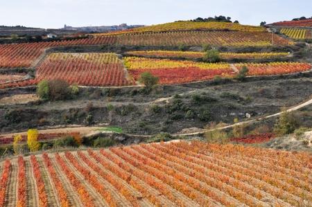 la: Vineyards in Autumn, La Rioja Spanien