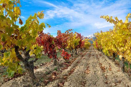 la: Weinberg bei Autumn, La Rioja Spanien Lizenzfreie Bilder