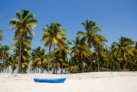 Pangane Beach, Mozambique photo