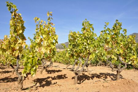 castilla: Vineyards In Autumn, La Rioja, Spain Stock Photo