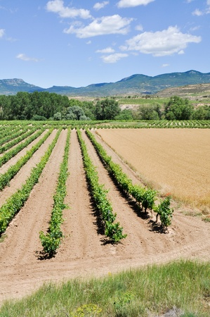 Landscape with vineyards at La Rioja, Spain photo