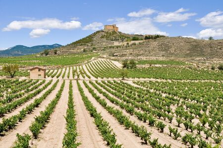 la rioja: Vineyards and Davalillo castle, La Rioja  Spain  Stock Photo