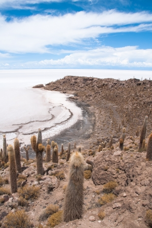 Incahuasi island in Salar de Uyuni, Bolivia photo