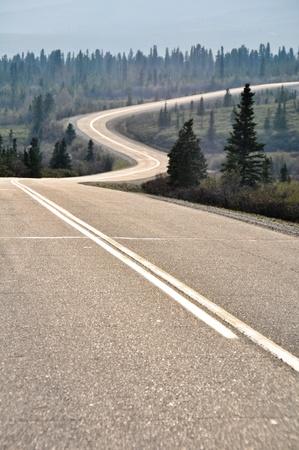 denali: Road in Denali national park, Alaska