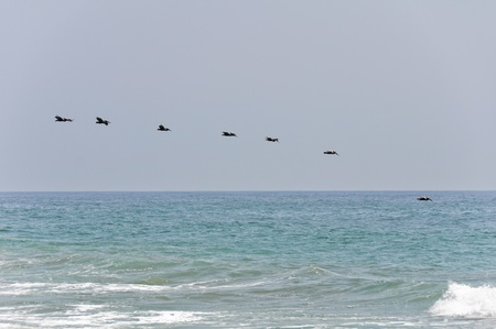 Pelicans in Flight at Malibu Beach, California Stock Photo - 18007779