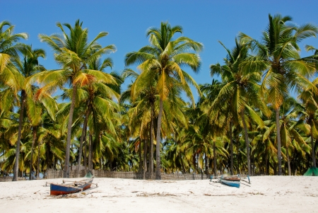 Pangane Beach, Mozambique Stock Photo - 17898044