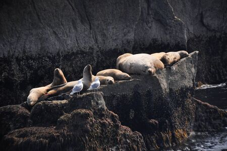 Colony of sea lions at Resurrection Bay, Alaska photo