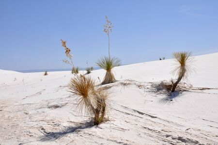 White Sands National Monument, New Mexico, USA Stock Photo - 18009055