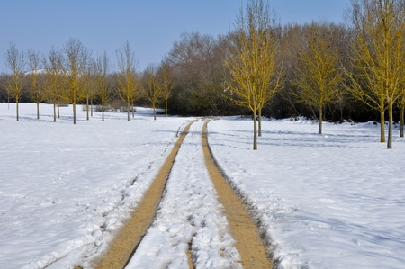 Salburua park in winter, Vitoria, Basque Country, Spain photo