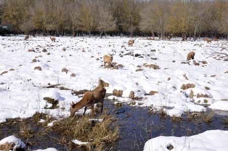 alava: Herd of deer at Salburua park, Vitoria, Spain Stock Photo
