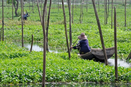 Farmer at Boeung Kak lake, January 2011, Phnom Penh, Cambodia Imagens - 18989180