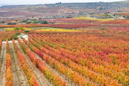 la rioja: Vineyards In Autumn, La Rioja, Spain Stock Photo
